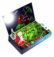 Живая открытка Моей половинке Вишенки Happy Plant - Оптовая продажа товаров для дома - ООО МАРКИК, Екатеринбург