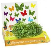 Живая открытка Хорошего настроения Happy Plant - Оптовая продажа товаров для дома - ООО МАРКИК, Екатеринбург