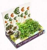 Живая открытка Евро зелень Happy Plant - Оптовая продажа товаров для дома - ООО МАРКИК, Екатеринбург